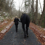 horses-20140820-003