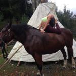 horses-20141203-002