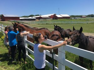 maine-yoga-retreats-horses-20180718-0745